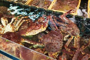 水槽の活タラバ蟹の写真素材 [FYI01759145]