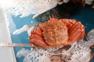 水槽から出した活毛蟹の写真素材 [FYI01759575]