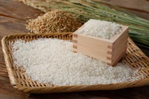 お米と稲のイメージ写真の写真素材 [FYI01759577]