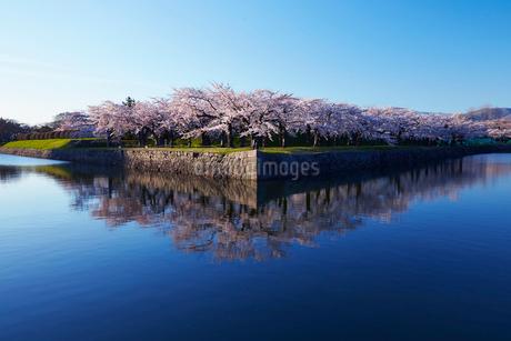 五稜郭公園の桜の写真素材 [FYI01759968]