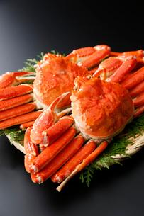 ズワイ蟹の写真素材 [FYI01760285]