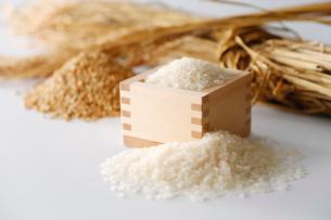お米と稲喪のイメージの横の写真の写真素材 [FYI01760730]