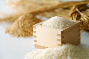 お米と稲喪のイメージの横の写真の写真素材 [FYI01760882]