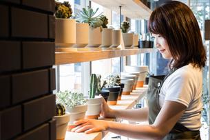 植木鉢を並べるカフェ店員の写真素材 [FYI01760929]