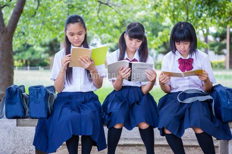 ベンチで勉強する中学生の写真素材 [FYI01761072]