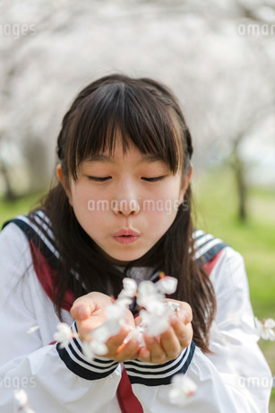 手の平に桜の花を集めた女子校生の写真素材 [FYI01761821]