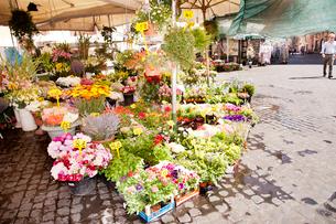 カンポ・デ・フィオーリ市場の花屋の写真素材 [FYI01762535]