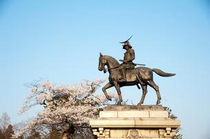 伊達政宗騎馬像と桜の写真素材 [FYI01762988]