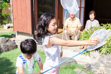 虫取りをする姉弟と祖父母の写真素材 [FYI01763225]
