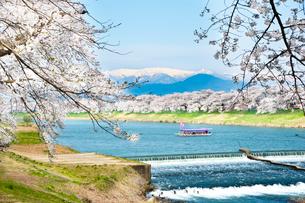 白石川堤一目千本桜と蔵王連峰の写真素材 [FYI01763458]