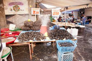 ムール貝の写真素材 [FYI01763742]