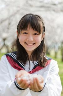 手の平に桜の花を集めた女子校生の写真素材 [FYI01764138]