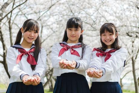 手の平に桜の花を集めた女子校生の写真素材 [FYI01764246]