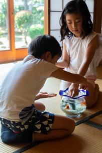 キンギョに餌をあげる姉弟の写真素材 [FYI01764305]