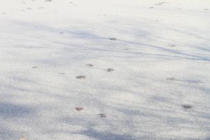 初冬の薄化粧の写真素材 [FYI01765582]