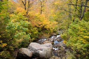 秋の月山 渓流の写真素材 [FYI01765665]