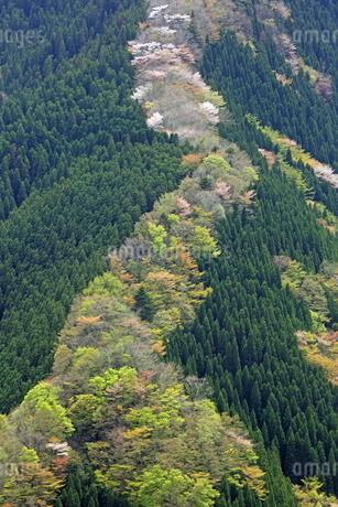 新緑の山肌の写真素材 [FYI01765673]