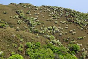 シロヤシオ満開の竜ヶ岳(鈴鹿山脈)の写真素材 [FYI01765761]