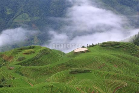 雲湧き上がる中国・龍脊の棚田の写真素材 [FYI01765780]
