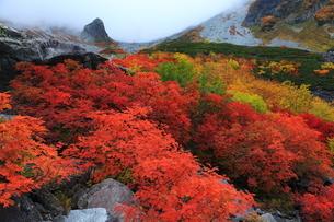 秋の涸沢(北アルプス)の写真素材 [FYI01765996]