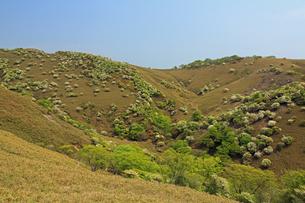 シロヤシオ満開の竜ヶ岳(鈴鹿山脈)の写真素材 [FYI01766060]