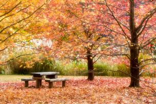 紅葉に彩られた公園風景の写真素材 [FYI01766068]