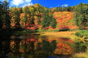 秋の滝見沼の写真素材 [FYI01766104]