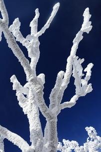台高山脈の樹氷の写真素材 [FYI01766125]