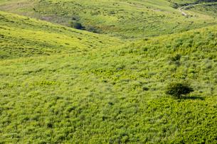 霧ヶ峰高原 物見石付近の草原の写真素材 [FYI01766163]