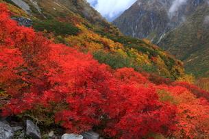 秋の涸沢(北アルプス)の写真素材 [FYI01766197]