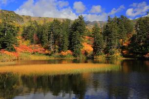 秋の緑沼の写真素材 [FYI01766214]
