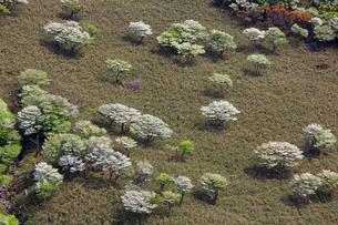 シロヤシオ満開の竜ヶ岳(鈴鹿山脈)の写真素材 [FYI01766230]