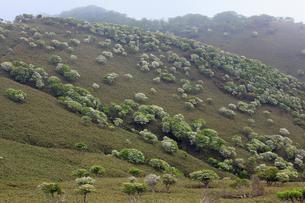 シロヤシオ満開の竜ヶ岳(鈴鹿山脈)の写真素材 [FYI01766239]