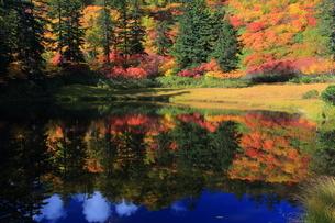 秋の滝見沼の写真素材 [FYI01766290]