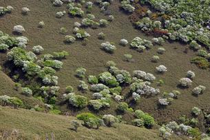 シロヤシオ満開の竜ヶ岳(鈴鹿山脈)の写真素材 [FYI01766306]