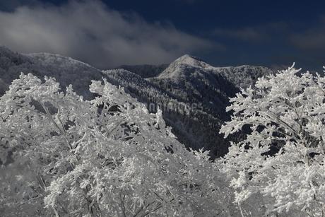 台高山脈の樹氷の写真素材 [FYI01766308]