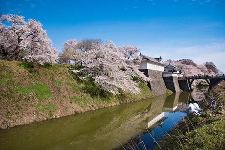 霞城公園東大手門と桜の写真素材 [FYI01766357]