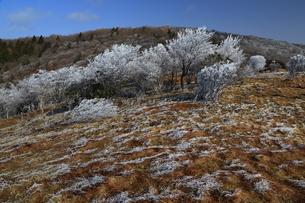 初冬の霧氷の写真素材 [FYI01766377]