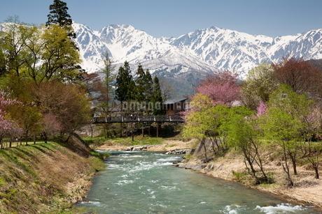 春の白馬三山を望むの写真素材 [FYI01766453]