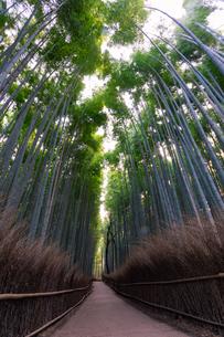 京都府 嵐山の竹林の道の写真素材 [FYI01766498]