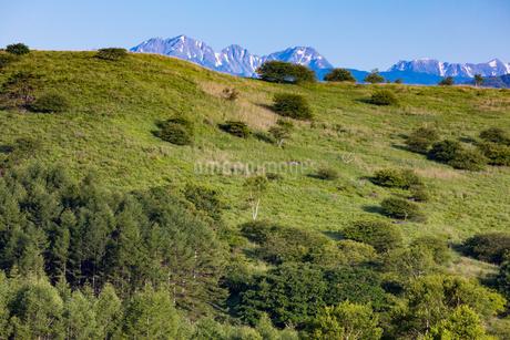 霧ヶ峰高原より北アルプス 穂高連峰を望むの写真素材 [FYI01766514]