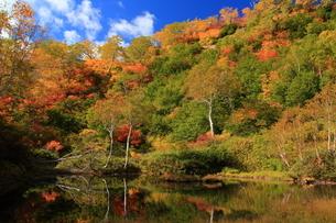 秋の湯ノ沼の写真素材 [FYI01766650]