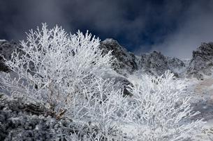 中央アルプス 千畳敷の霧氷と宝剣岳の写真素材 [FYI01766670]