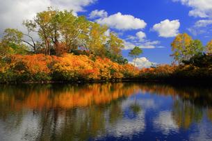 秋のエゾ沼の写真素材 [FYI01766809]