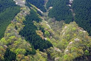 新緑の山肌の写真素材 [FYI01766833]