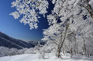 台高山脈の樹氷の写真素材 [FYI01766839]