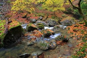 秋の阿瀬溪谷(蛇つぼ)の写真素材 [FYI01766865]