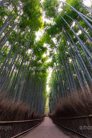 京都府 嵐山の竹林の道の写真素材 [FYI01766920]