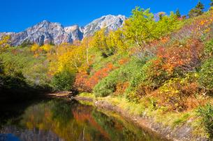 紅葉の遠見尾根より五竜岳を望むの写真素材 [FYI01766947]
