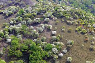 シロヤシオ満開の竜ヶ岳(鈴鹿山脈)の写真素材 [FYI01767047]